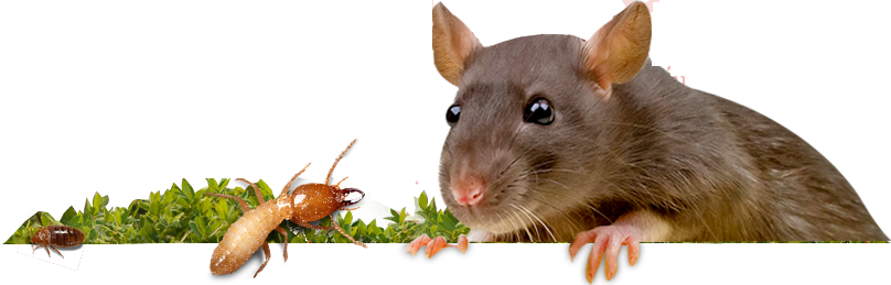 pestcontrol_banner